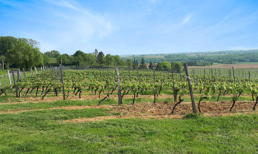 Château du Pouey - Vins de Madiran