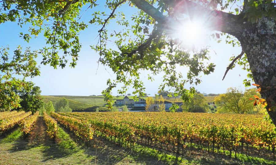 Domaine les Remparts - Côtes de Gascogne