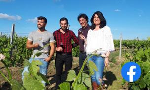 Vineyards of Occitanie - Facebook Community