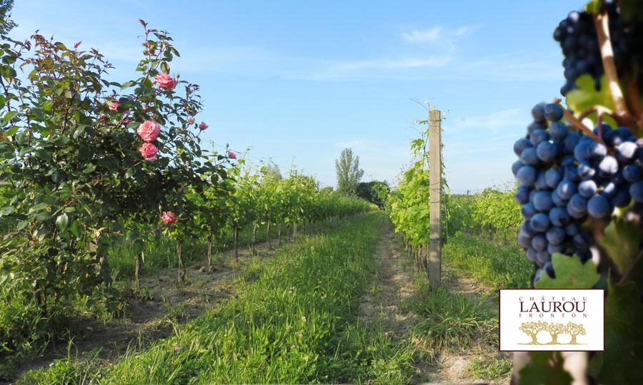 Château Laurou - Vins de Fronton bio