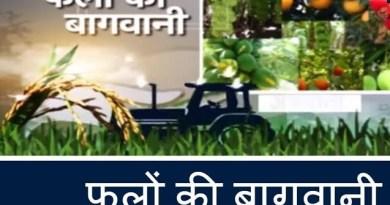 गांव में बागवानी से रोजगार के अवसर।