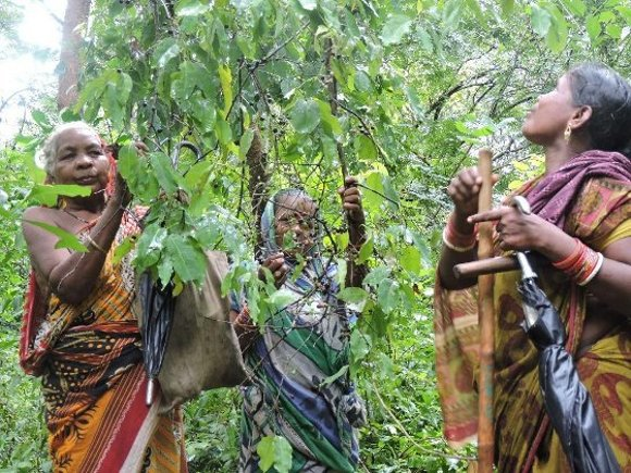 Women plucking jamun and other berries they found in the forest while patrolling.