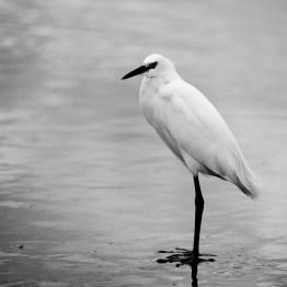 Sea Bird, Ormond Beach, FL