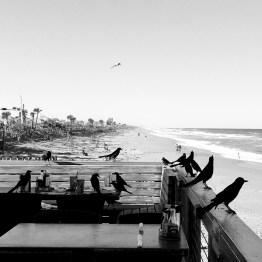 Funky Pelican, Flagler Beach, FL