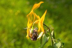 burning_flowerjpg