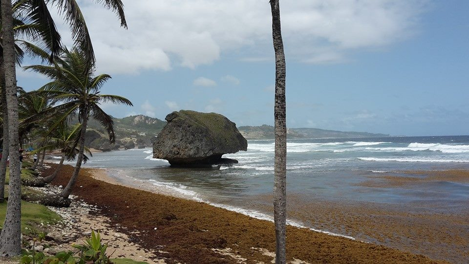 Bathesheba Barbados