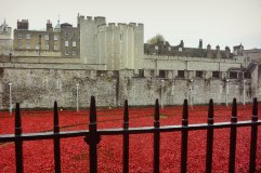 """888,246 ceramic red poppies in front of the Tower of London (autumn 2014). Each represented one British or colonial life lost during the WWI. """"Blood Swept Lands and Seas of Red""""."""