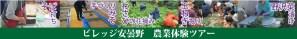 ビレッジ安曇野 農業体験ツアー(手づくりみそ体験/わさびの花摘みとわさび体験/玉ねぎ掘りとそば打ち体験/野沢菜漬け体験)