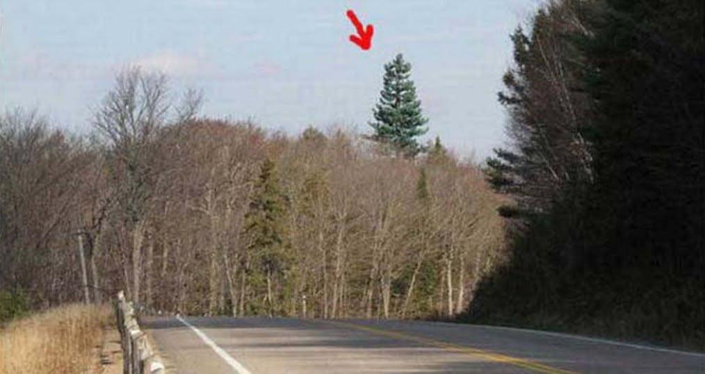 Szerinted egy fa van a képen? Biztos vagy benne? Nézd meg egy kicsit közelebbről...