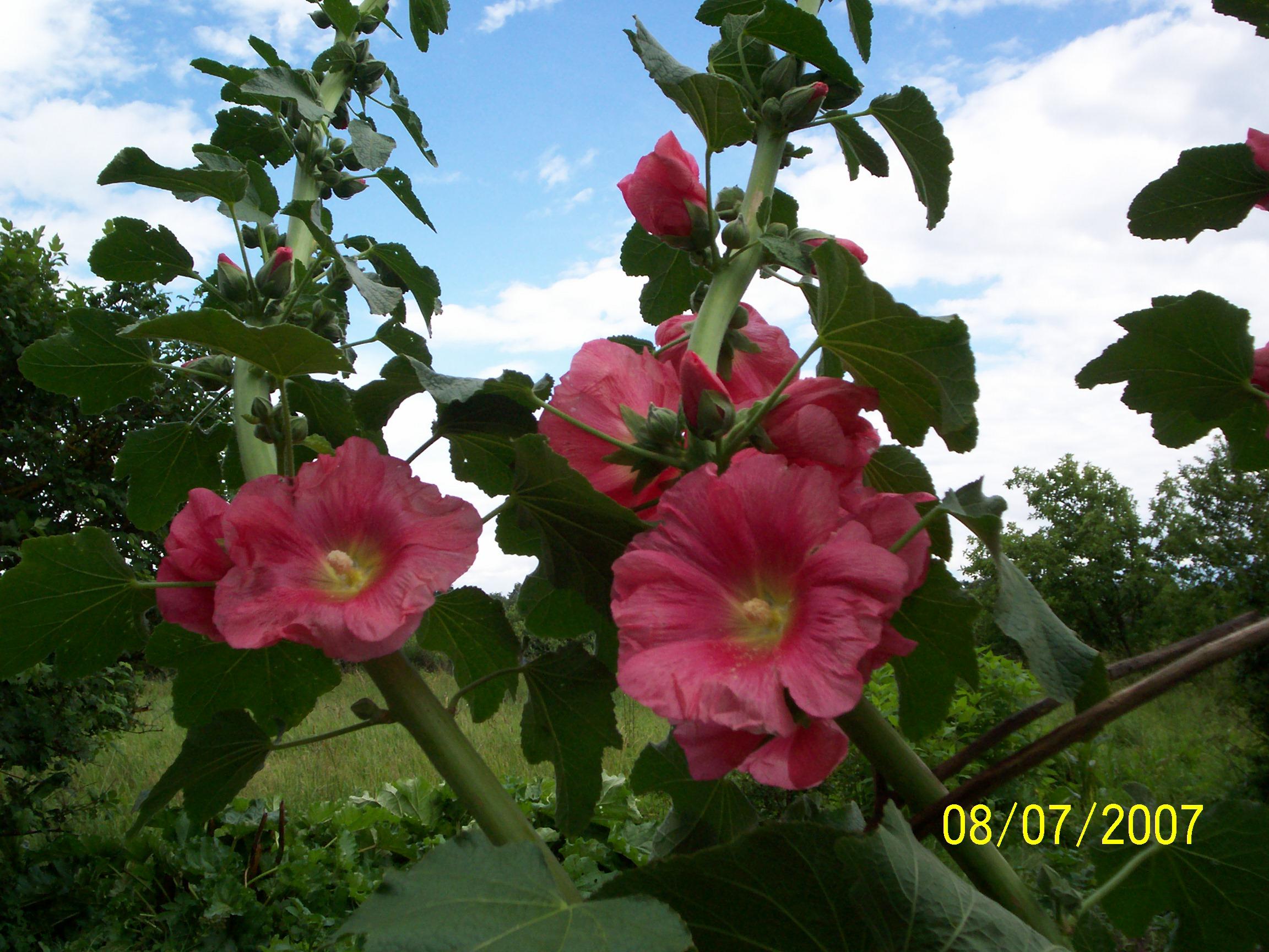 zied jūlijā