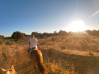 Bike tour horse riding experience