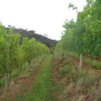 5 Vinícolas Para Visitar na Serra Catarinense