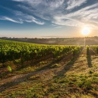 Viva o Terroir Nacional: Sim, Nós Temos Vinhos Maravilhosos!