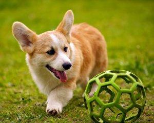 Villa Ad Alta Pets Welcomed