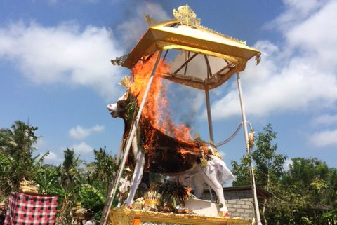 White cow ablaze in flames during Ubud cremation ceremony