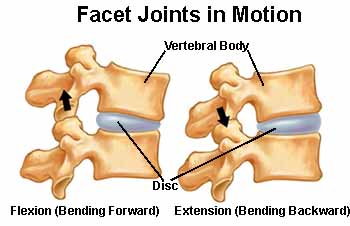 facet joint motion