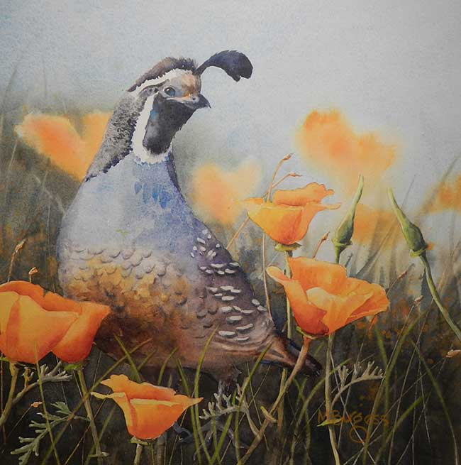 Image of a partridge in watercolor by Mary Burgess