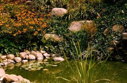 Village_Landscape_Pond_Water_Feature6