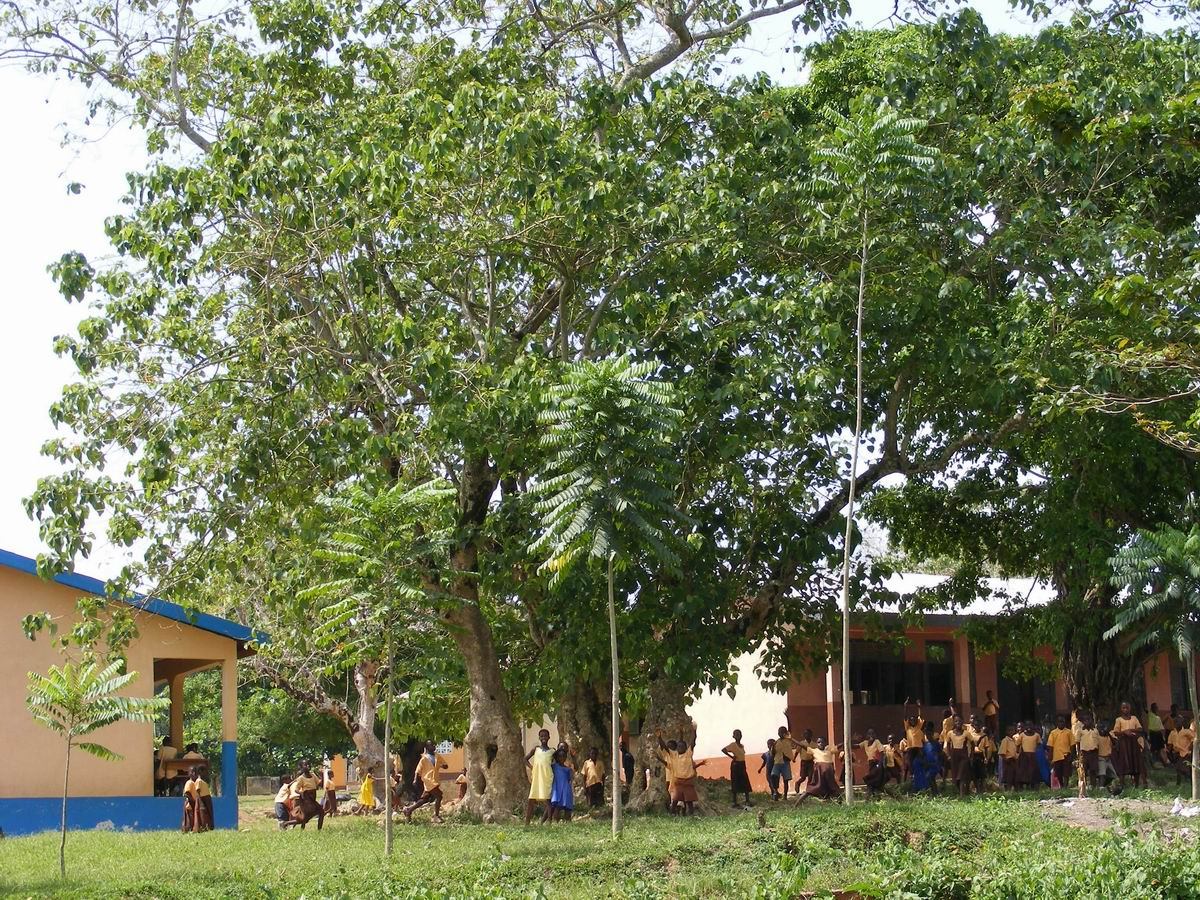 School children with trees after one year of growth