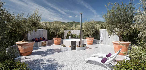 award-winning-olive-trees