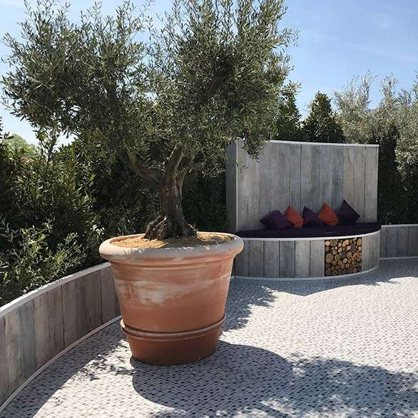 Olive Trees For Sale National Growers Of Olive Trees Villaggio Verde