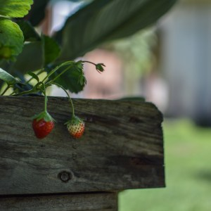 bout de jardin- tête en Leyre