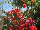 lovely blossom