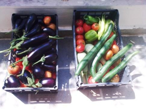 Экологически-чистые овощи из огорода