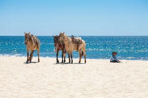Three horses on a Mexican beach