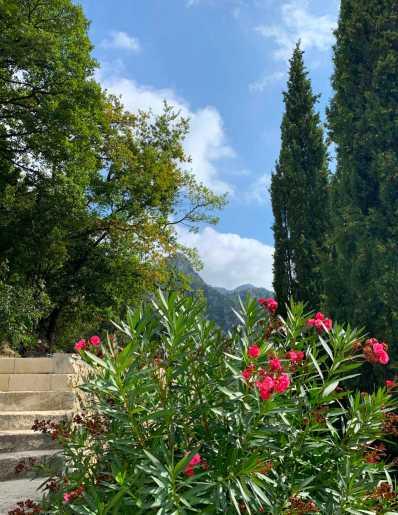 fleurs_Castel_3488