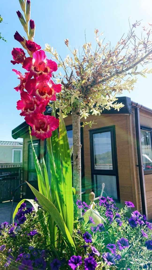 Gladiolus i kruka framför villavagn