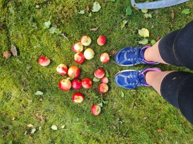 Äpplen på gräsmatta