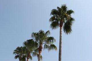 as quatro palmeiras