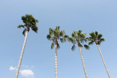 as palmeiras special
