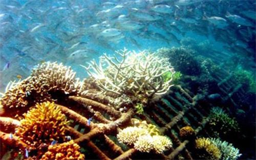 Lovina-Reef