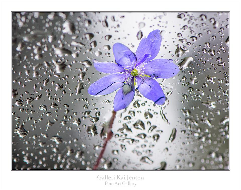 Vårregn