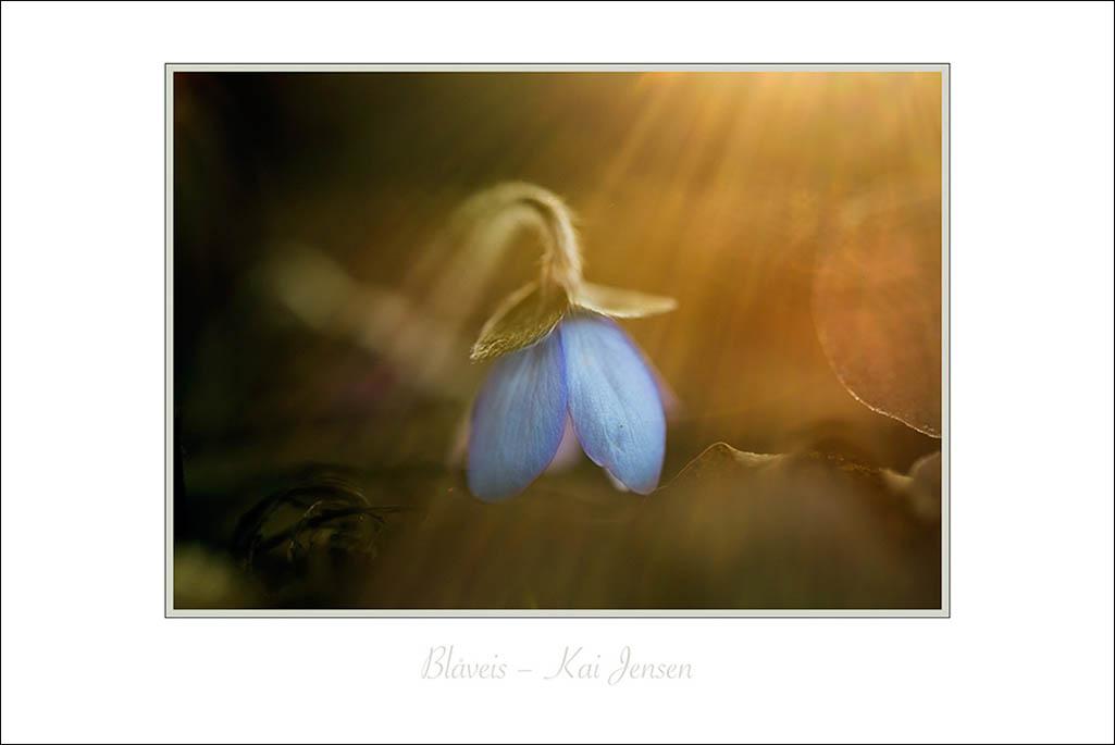 kai jensen galleri blomst lys