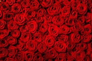 Gėlės Vilniuje
