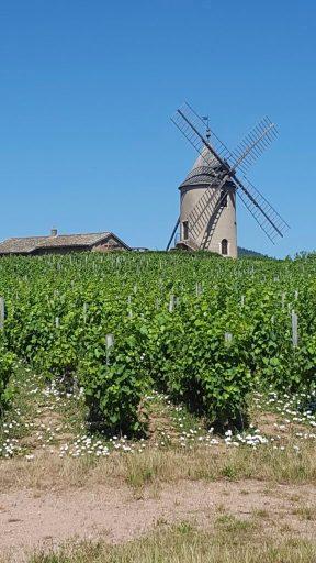 Moulin e Moulin-à- Vent Beaujolais