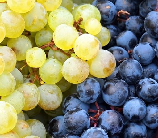 Raisins blancs et rouges pour faire du vin blanc