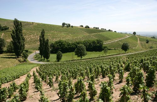 chateau_javernand_Beaujolais