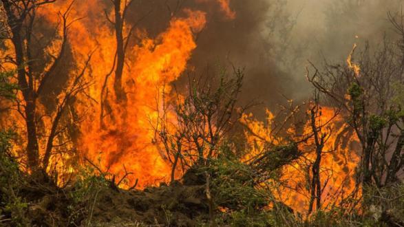 Resultado de imagen para incendios de campo en general alvear