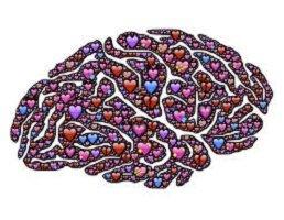 Alimentazione ideale per il cervello