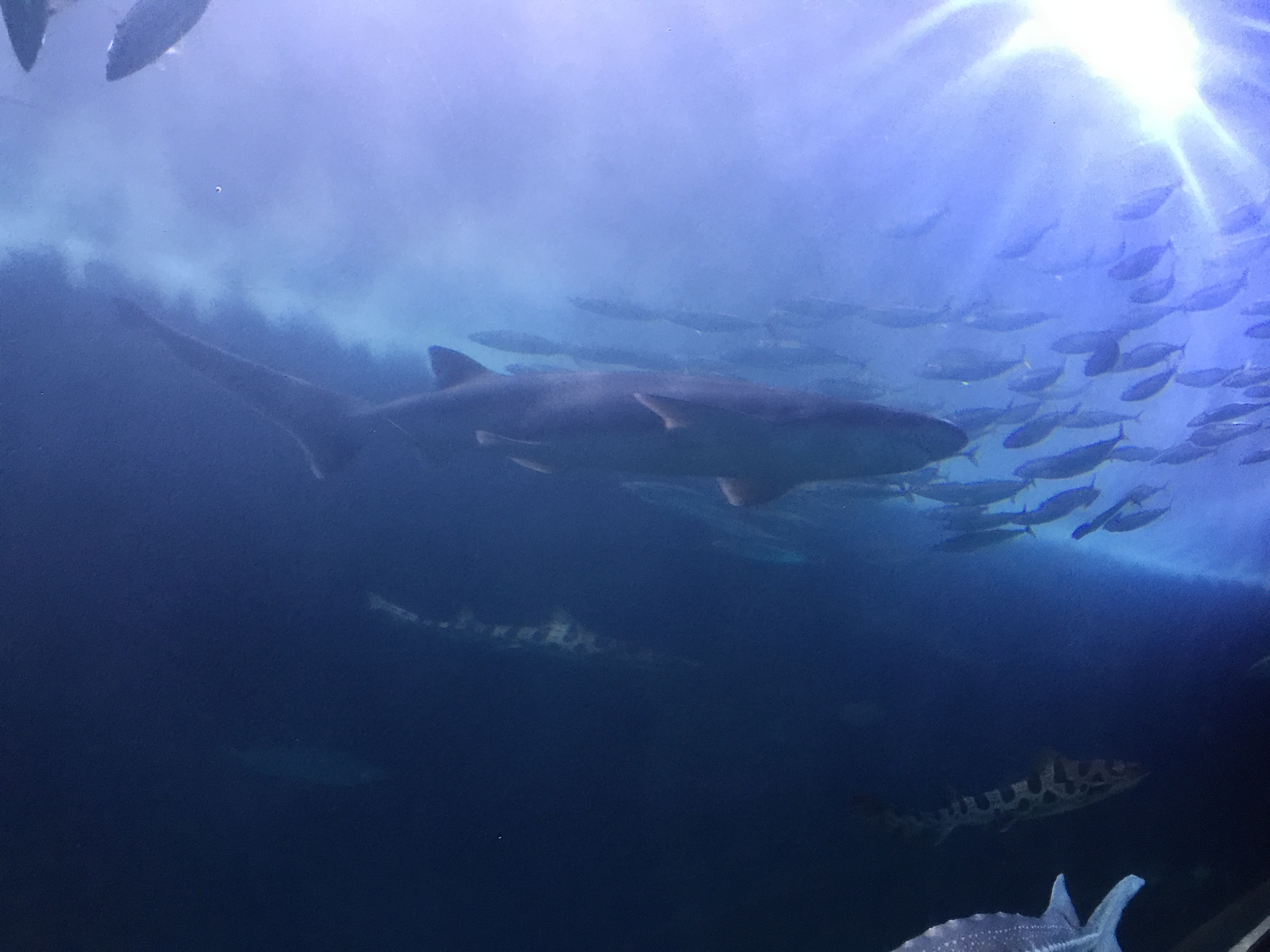Sun rays burst into an aquarium containing a medium sized shark and a large schoal of fish