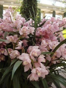 longwood-orchids-2