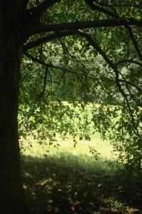 Joy in the Woods 22015-05