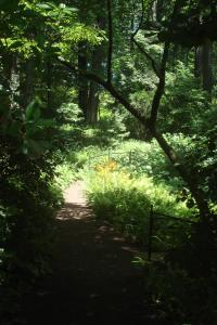 Joy in the Woods 22015-08
