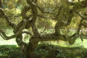 Joy in the Woods 22015-09