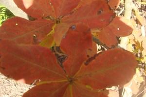 Mid-Autumn 2015 Winterthur Oct 22 2015-05