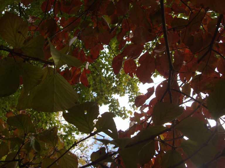 Winterthur Autumn 2013-14